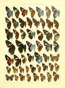Porphyrogenes httpsuploadwikimediaorgwikipediacommonsthu
