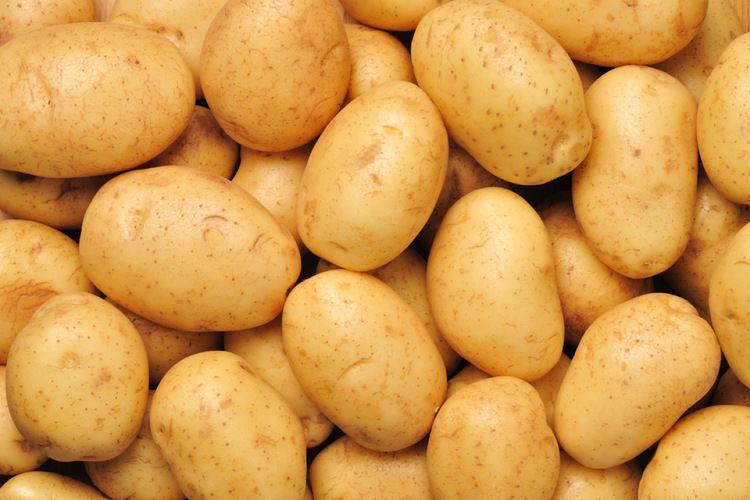 Potato Spelling potato 39potatoe39 OxfordWords blog
