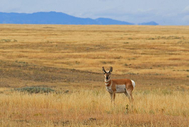 Prairie American Prairie Reserve