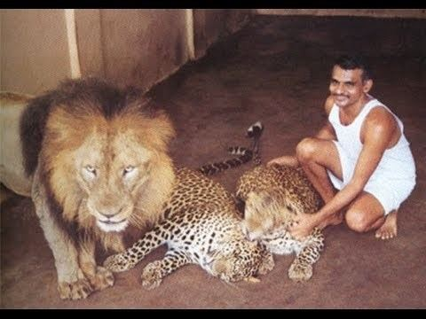 Prakash Amte A Great Salute To Dr Prakash Amte Playing With Lion Leopard YouTube