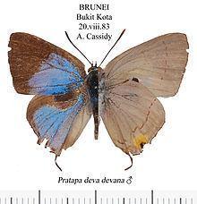 Pratapa httpsuploadwikimediaorgwikipediacommonsthu