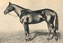 Precipitation (horse) httpsuploadwikimediaorgwikipediacommonsthu
