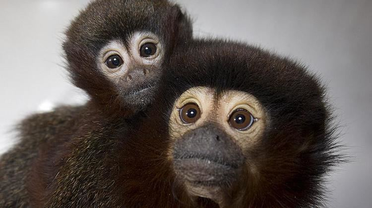Primate Facts about the California National Primate Research Center at UC