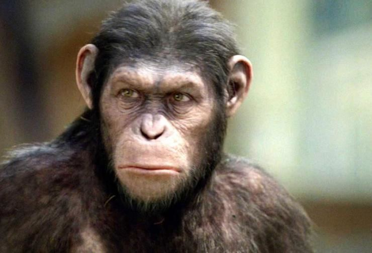 Primate Brains Genes and Primates The future of higher research on the