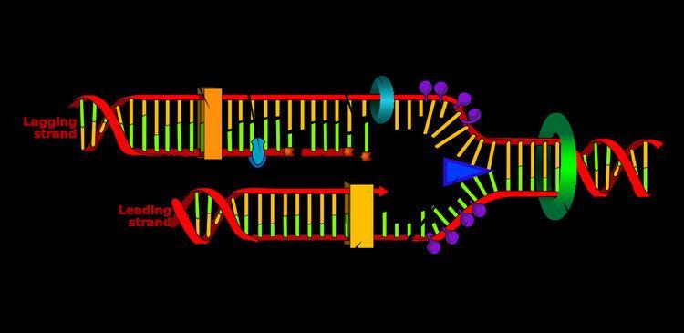 Primer (molecular biology)
