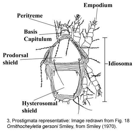 Prostigmata Keys to the Blood and Tissue Feeding Mites Associated with Albertan