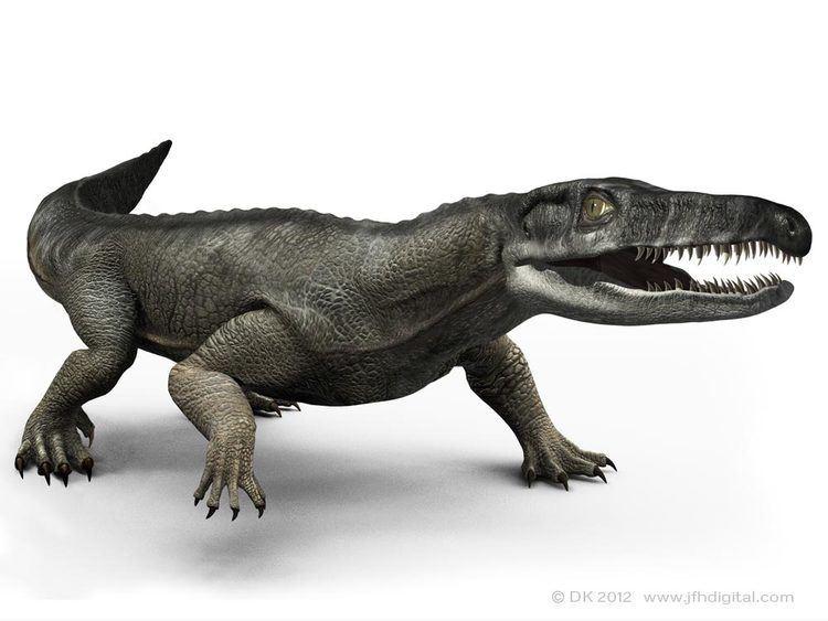 750 x 563 jpeg 46kBChasmatosaurus