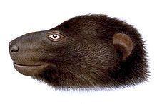 Pteralopex httpsuploadwikimediaorgwikipediacommonsthu