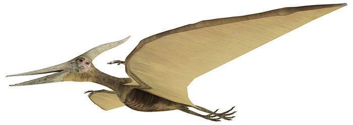 Pterosaur Pterosaur Revolution Confirms Creation The Institute for Creation