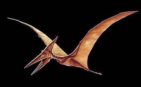 Pterosaur Pterosaur Dinosaur photos information Dinosaur Gallery