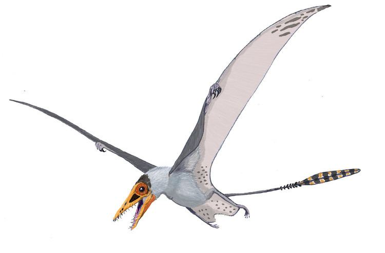 Pterosaur httpsuploadwikimediaorgwikipediacommons00
