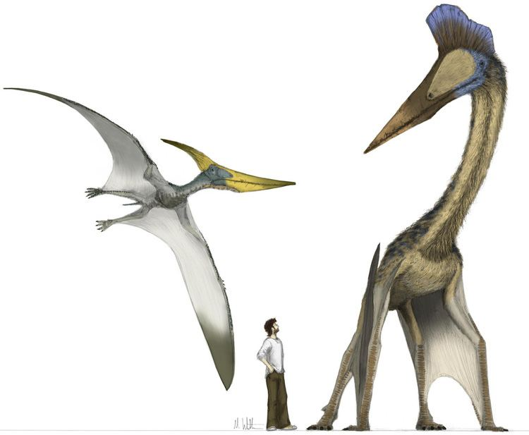 Pterosaur The Great Pterosaur Makeover Phenomena
