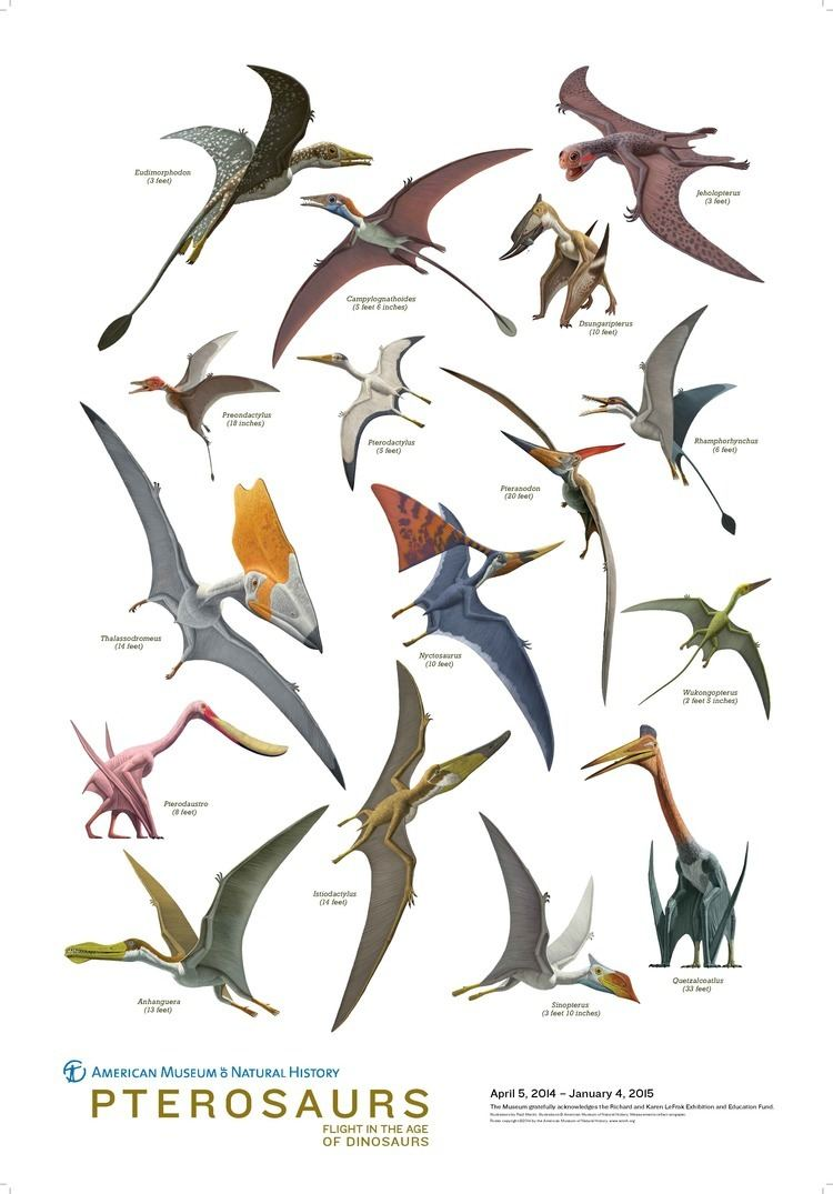 Pterosaur Pterosaur history and some interesting facts