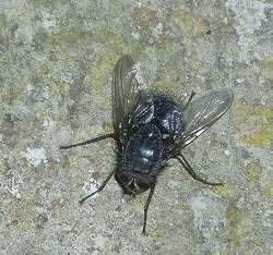 Pterygota Subclass Pterygota Amateur Entomologists39 Society AES