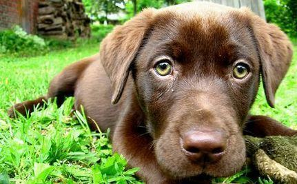Purebred dog Want A Purebred Dog You Can Still Have One Through Adoption Care2