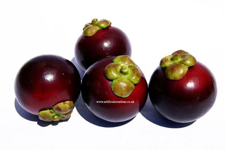 Purple mangosteen Purple Mangosteen