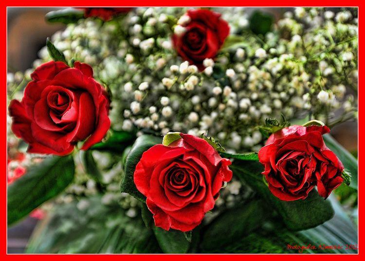 Quattro rose rosse Quattro rose rosse antonio Flickr