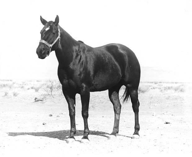 Quo Vadis (horse) httpswwwaqhacommedia2878quovadisjpg