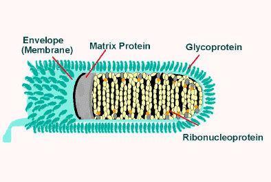 Rabid Horse Minnesota Worms Amp Germs Blog - 394×265