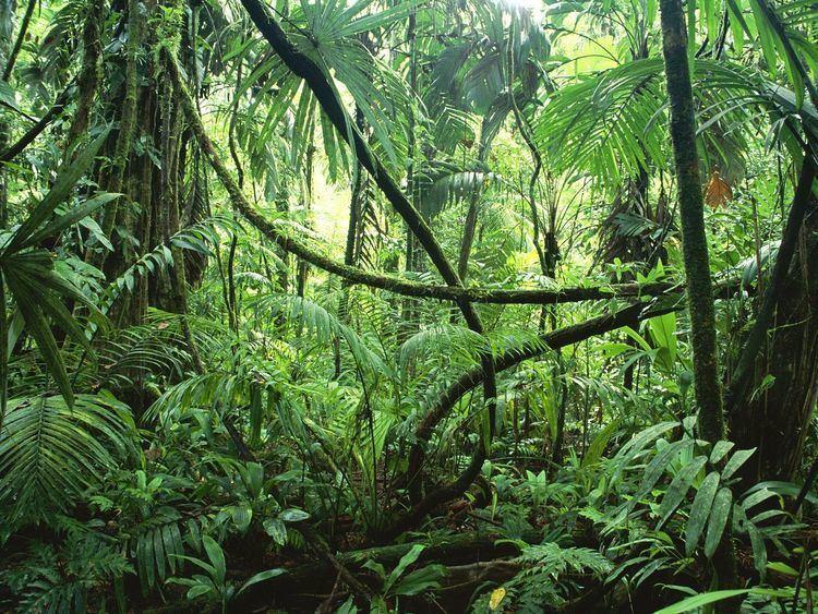 Rainforest Alchetron The Free Social Encyclopedia