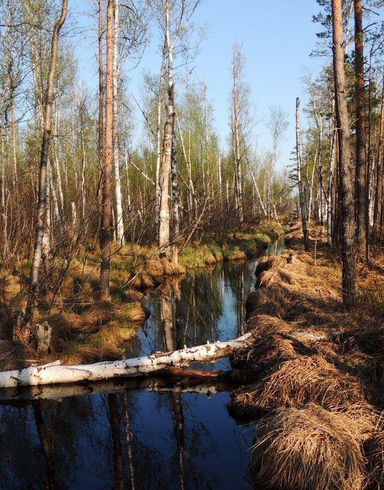 Rdeysky Nature Reserve