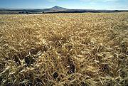 Re Barleycorn Enterprises Ltd httpsuploadwikimediaorgwikipediacommonsthu