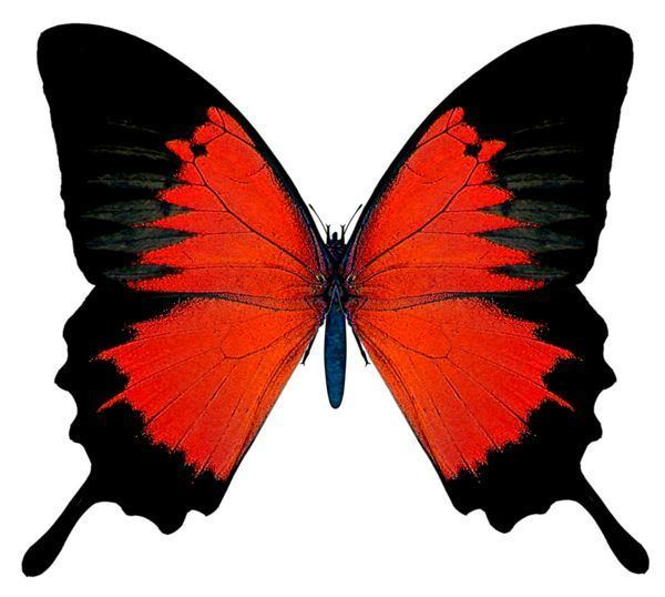 Red Butterfly Best 25 Red butterfly ideas on Pinterest Butterfly Beautiful