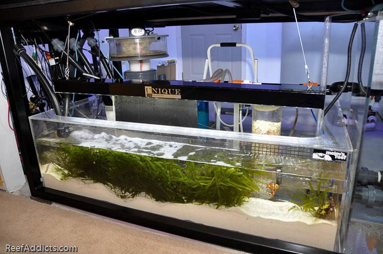 Refugium (fishkeeping) Reef Addicts Product Review Unique LED Lighting39s refugium fixture