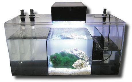 Refugium (fishkeeping) Refugiums Fish Tanks Direct