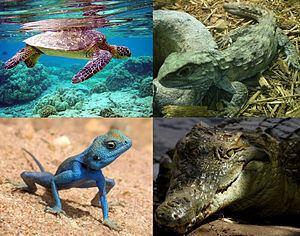 Reptile httpsuploadwikimediaorgwikipediacommonsthu