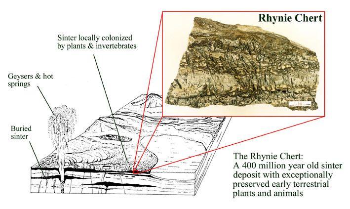 Rhynie chert The Biota of Early Terrestrial Ecosystems The Rhynie Chert