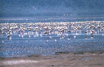 Rift Valley lakes httpsuploadwikimediaorgwikipediacommonsthu