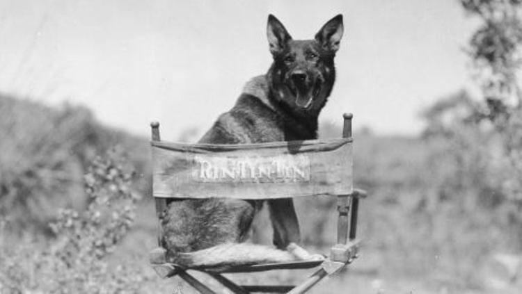 Rin Tin Tin When Warner Bros Went to the Dogs Silver Screenings