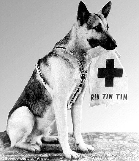 Rin Tin Tin Rin Tin Tin Hollywood39s top dog had 40m fans and drank milk from a