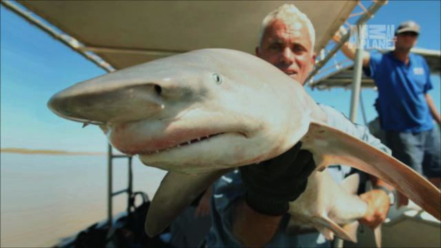 River shark netstoragediscoverycomfeedsbrightcoveassetst