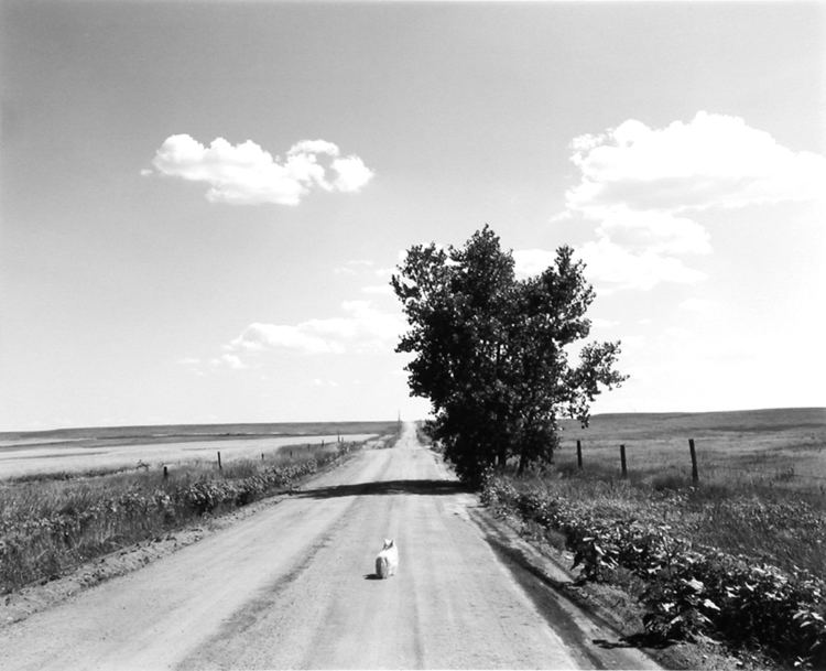 Robert Adams (photographer) Robert Adams Fraenkel Gallery