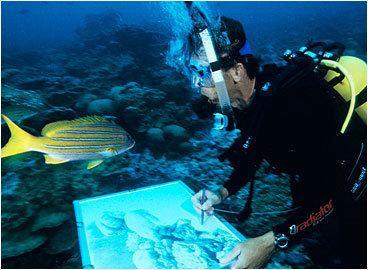 Roger Swainston Roger Swainston Underwater Art