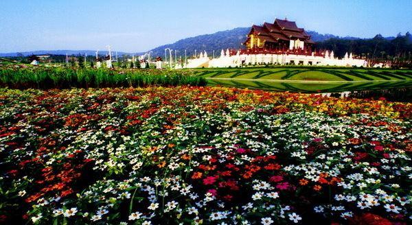 Royal Flora Ratchaphruek Royal Flora Ratchaphruek Royal Flora Chiang Mai