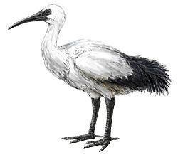 Réunion ibis httpsuploadwikimediaorgwikipediacommonsthu