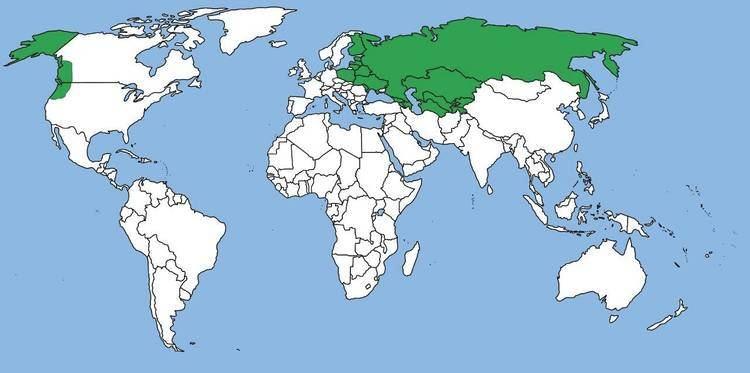 Russian Empire The Russian Empire YouTube