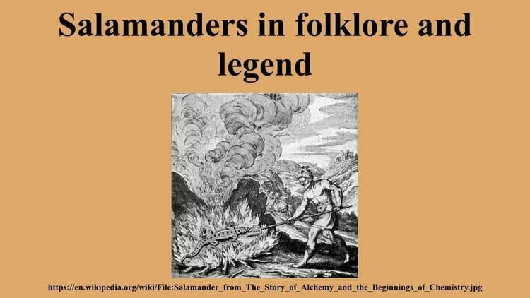 Salamanders in folklore and legend Salamanders in folklore and legend YouTube