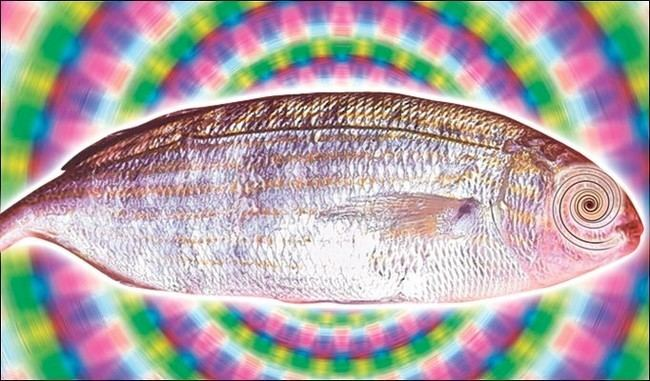 Salema porgy There Is A Fish That Causes Men To Hallucinate After Consumption