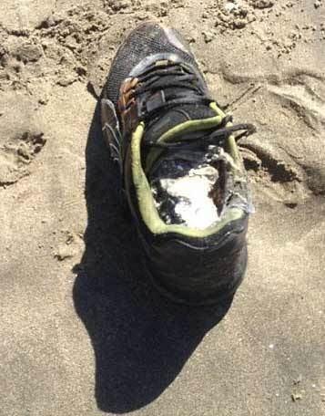 Salish Sea human foot discoveries Nutty News Nutty Facts Nutty Jokes Nutty Videos New Nutty
