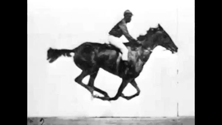 Sallie Gardner at a Gallop Sallie Gardner at a Gallop 1878 YouTube