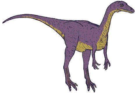Saltopus Saltopus Dinosaur Facts information about the dinosaur saltopus