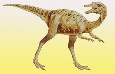 Saltopus Saltopus Dinosaur facts pictures Saltopus information