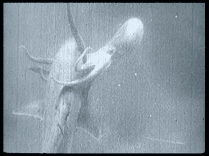 Samarang (film) Samarang aka Shark Woman 1933 The Creature Feature Bleachers