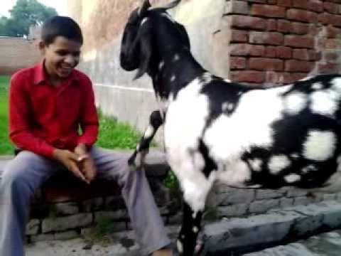 Sandi, Uttar Pradesh httpsiytimgcomvihVfI5w3DeNAhqdefaultjpg