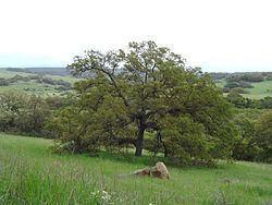 Santa Rosa Plateau httpsuploadwikimediaorgwikipediacommonsthu