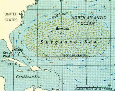 Sargasso Sea Sargasso Sea
